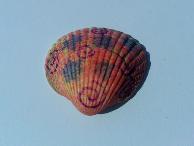 Shell with patterns drawn in felt tip