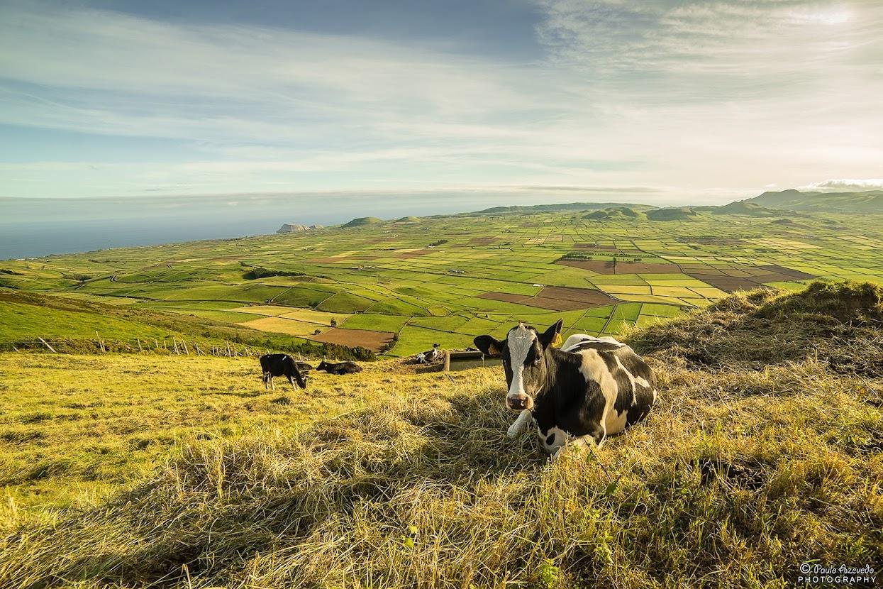 Vista do Miradouro da Serra do Cume, Ilha Terceira, Açores