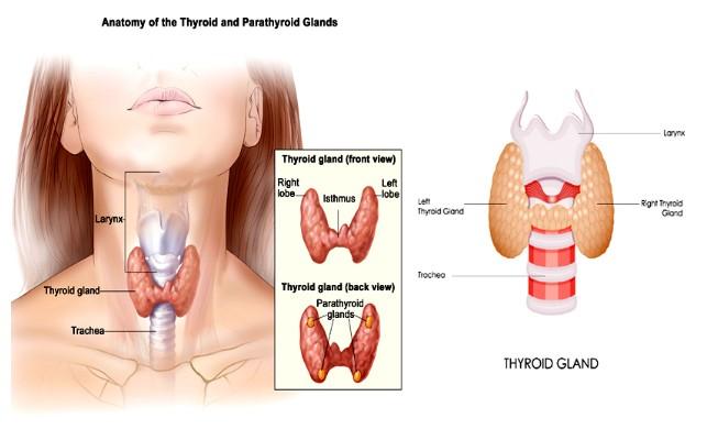 Korang baru disahkan menghidap tiroid? Jom baca 9 info ini sebagai pengetahuan pertama korang!