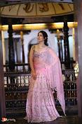 Raashi Khanna Pongal Photoshoot-thumbnail-4