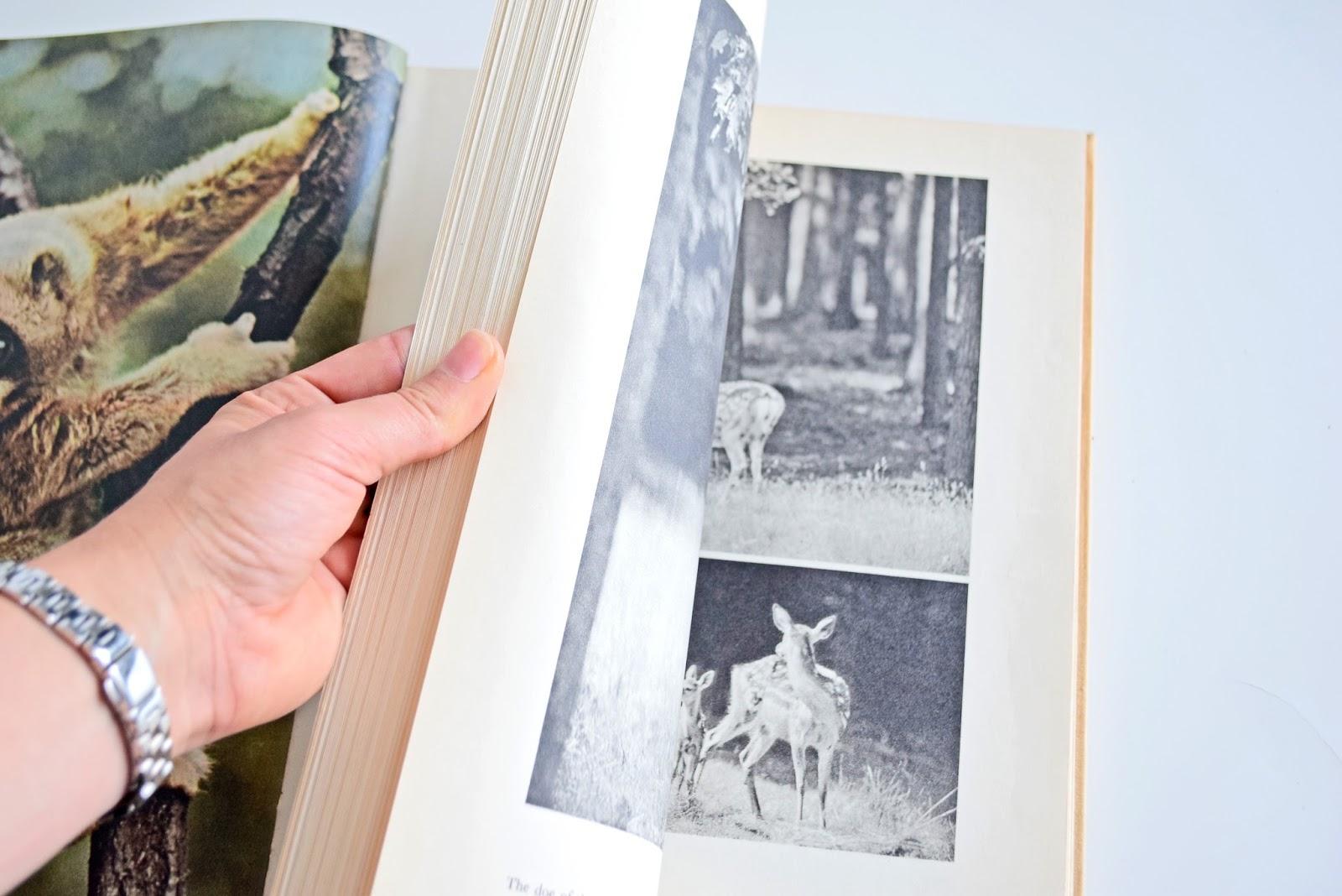 książka o przyrodzie
