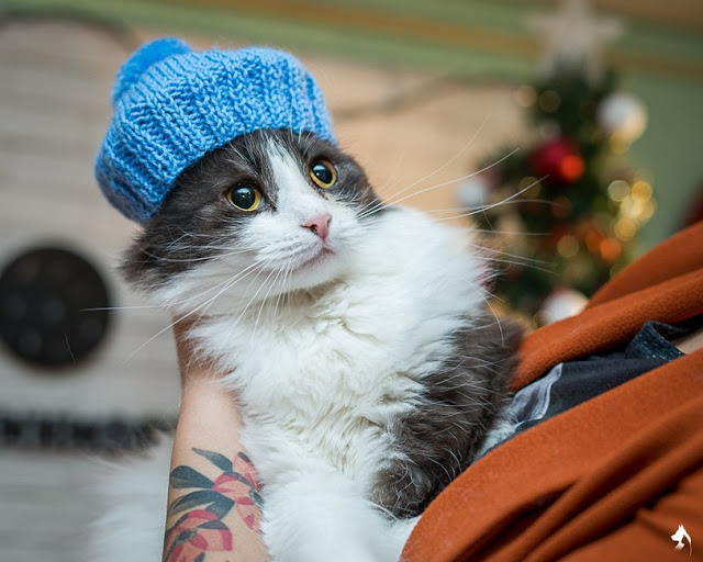 новогодняя фотосессия с котами