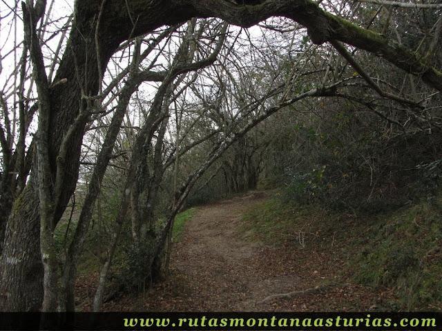 Bosque de Cuadrizales