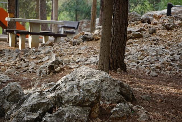 שולחן פיקניק בפארק הארזים