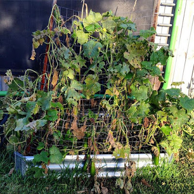 Dehydrated Veggie Patch after a Hot Summer