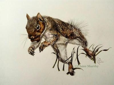 squirrel painting coloured pencils