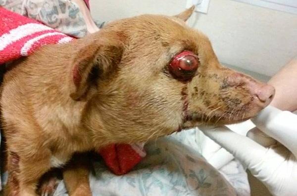La Guardia Civil pide ayuda para localizar a los autores del apaleamiento de una perrita