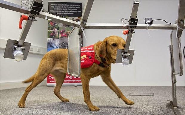 pesquisa cachorro