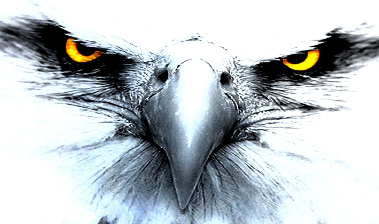 Wallpaper Hd 1080p Black And White Eagle Hd Wallpapers
