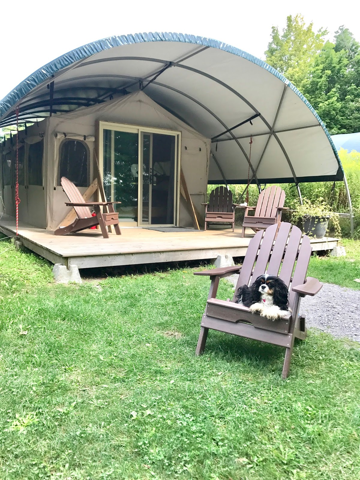 Bijuleni | Glamping With Your Pet at Long Point Eco Adventures Norfolk County - Cavalier King Charles Spaniel lounging on chair