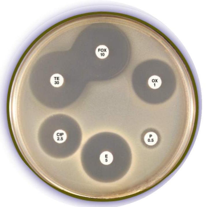 My Scientific Blog - Research and Articles: June 2012 Резистентность К Антибиотикам