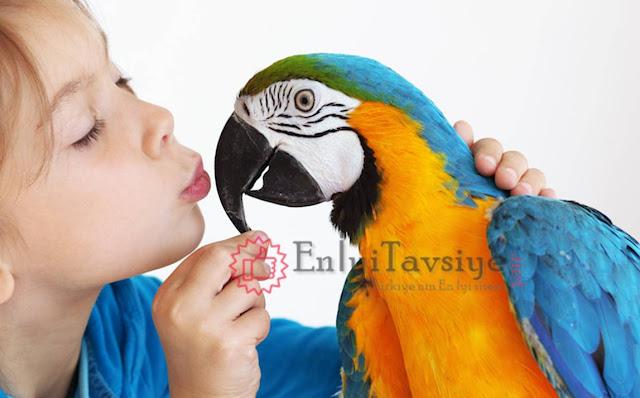 En İyi Papağan Yemi Kapak Fotoğrafı
