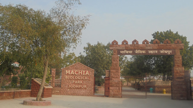Machiya-Safari-Park-in-Jodhpur-Tour