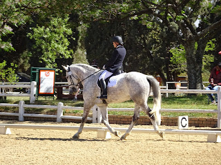 A grey horse being ridden at a dressage show in an outdoor riding school
