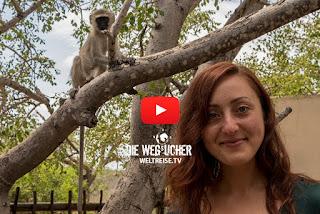 Balule Game Reserve, Südafrika Safari, Affen, Die Wegsucher, Arkadij und Katja aus Bremerhaven