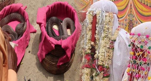 ajab-jankari-brides-father-have-to-give-snake-in-marriage-दहेज़ में सांप