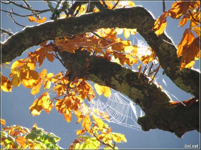 ảnh nhện giăng tơ trên thân cây mùa thu