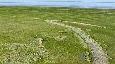 Playa de arena verde de Kourou