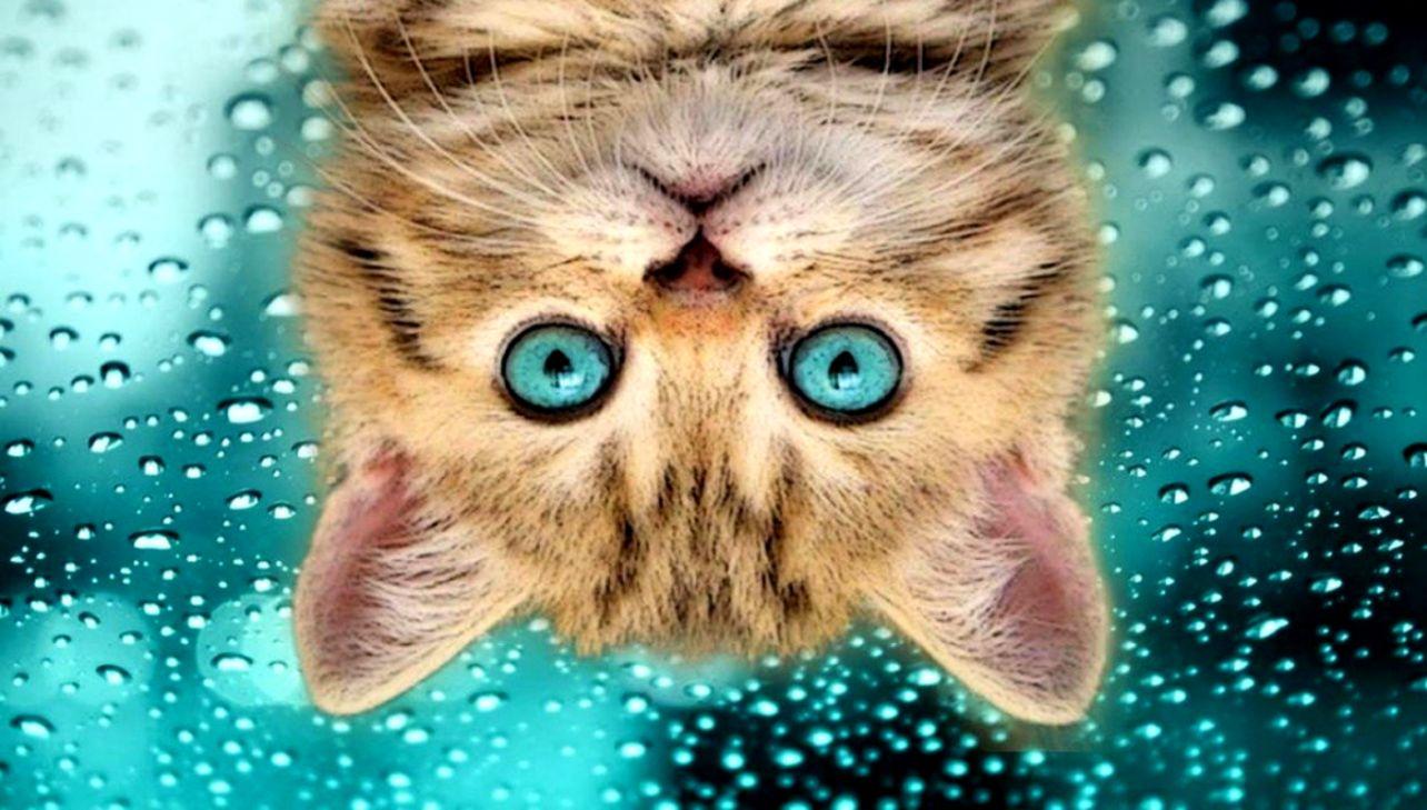 Funny Cat Selfies Wallpapers Hd Wallpapers Jobs