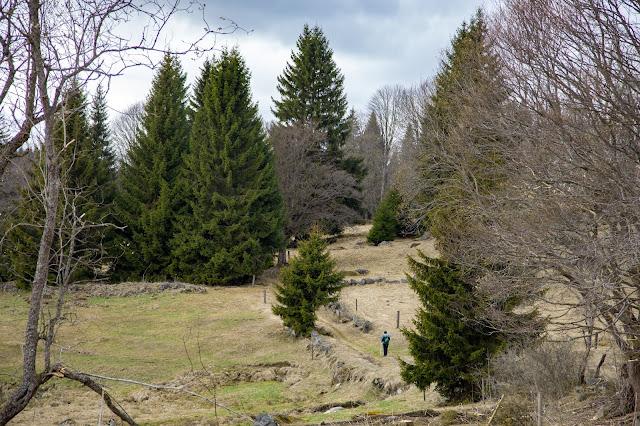 Auf vergessenen Wegen von Finsterau nach Buchwald  Wandern im Bayerischen Wald  Wanderung Nationalpark Bayerischer Wald 13