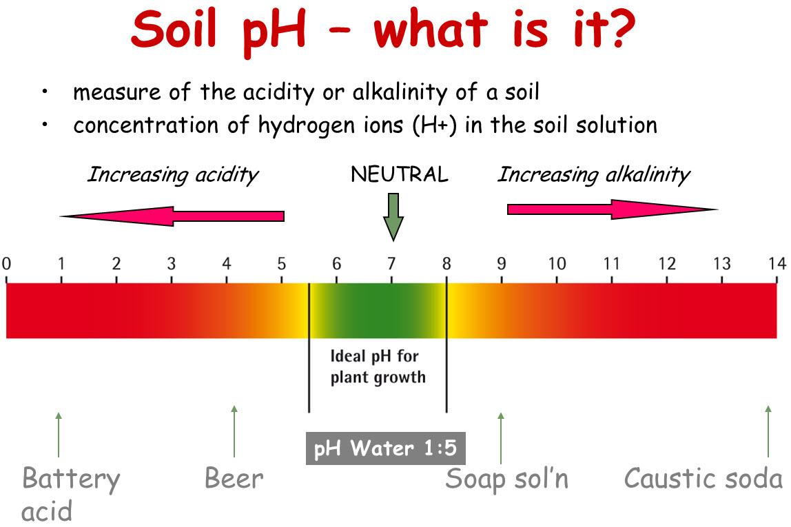 How to test soil ph agriculture india farm department for Explain soil