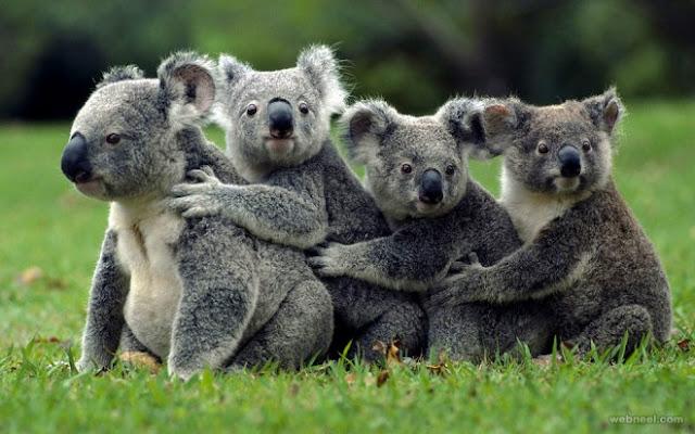 صور حيوانات جميــله