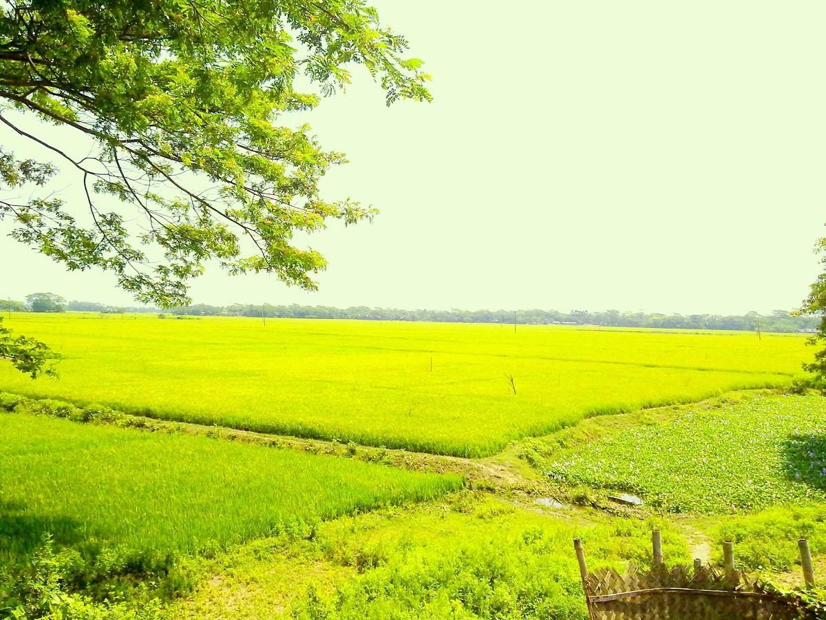 """nature wallpapers of bangladesh: Wallpaper: Wallpaper: Bangladesh """"Natural Paradise Of The"""