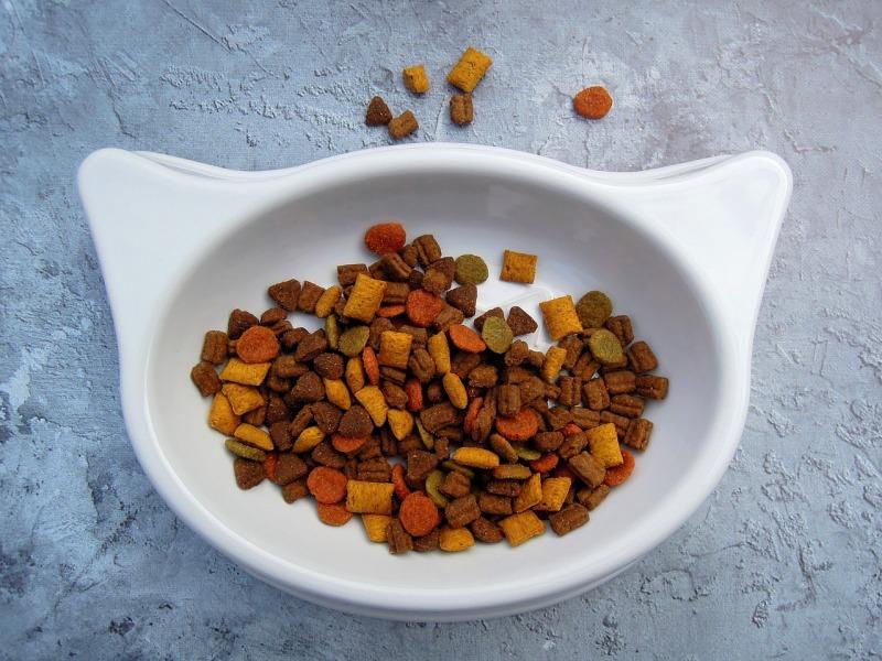 darmowe próbki karmy dla kota
