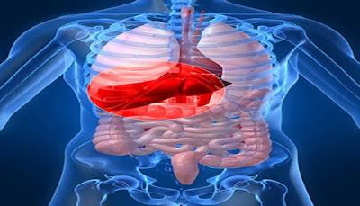 هل تعلم ما هو العضو فى جسم الانسان الذى لا يصاب بالسرطان وما السر وراء ذلك ؟