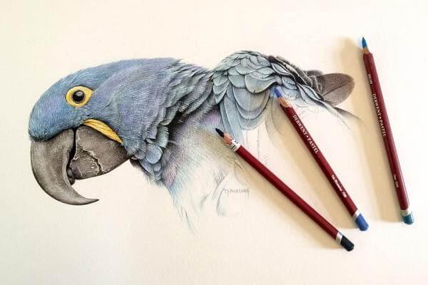 09-Hyacinth-Macaw-Derwent-Martin-Aveling-Animal-Portraits-www-designstack-co