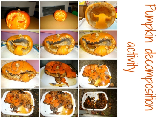 pumpkin decomposition activity - understanding the world