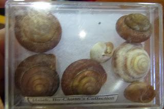 清洗完成的蝸牛殼就收進去小盒子中