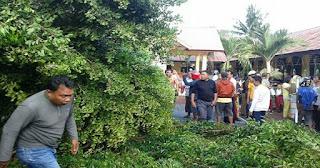 Berbaris Hendak Mengikuti Upacara Bendera, 2 Siswa SD Tewas Tertimpa Pohon Tumbang