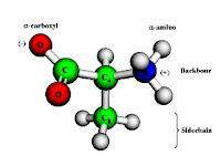 Protein Sebagai Salah Satu Molekul Penyusun Membran Plasma