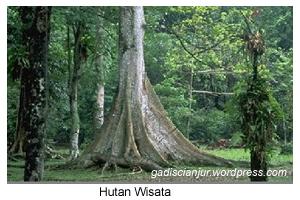 Love and Save Your Forest Kelestarian Hutan Jenis Hutan