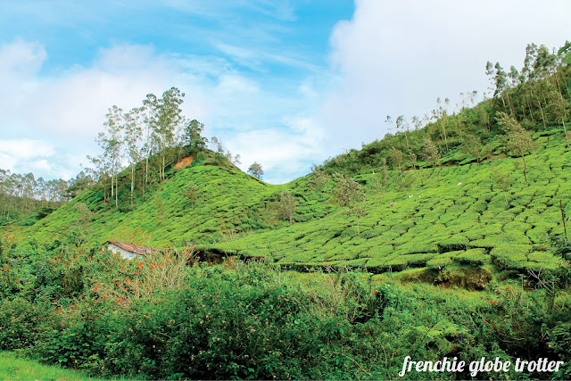 Letchmi Tea Estate, Munnar - Kerala