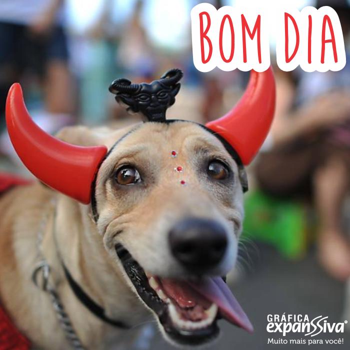 Mensagem de Bom Dog