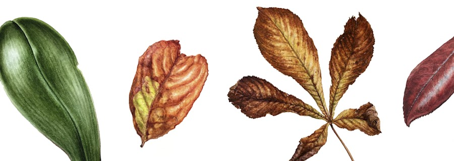 image of four differnt paintings of leaves