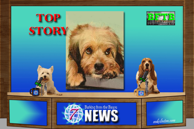 BFTB NETWoof News Top Story on a street dog