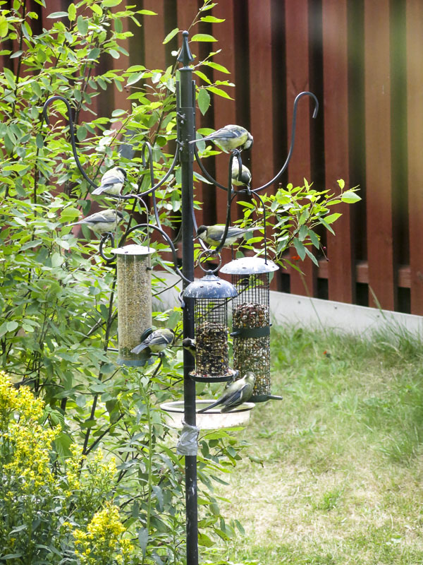 fåglar, birds