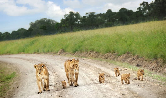 Are You Geared Up For Travel To East Africa For A Closer Look Of Wildlife?