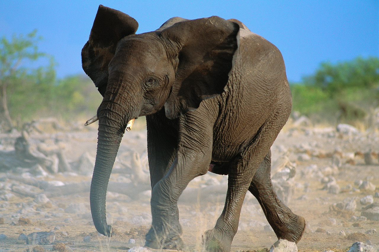 Different Types Elephant High Resolution Hd Images Free