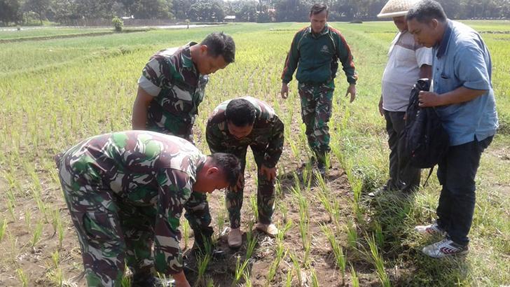 Pupuk Semprot Organik Nutrisi Wijayakusuma Kini Masuk Wilayah Kecamatan Adipala