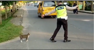https://rumble.com/v512i5-kind-hearted-police-help-cat-to-cross-the-road.html