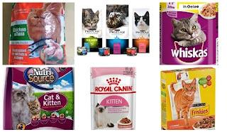 Daftar Harga Makanan Kucing Persia Terbaik dan Terlengkap