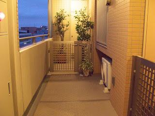 Corridor of Tokyo condominium.