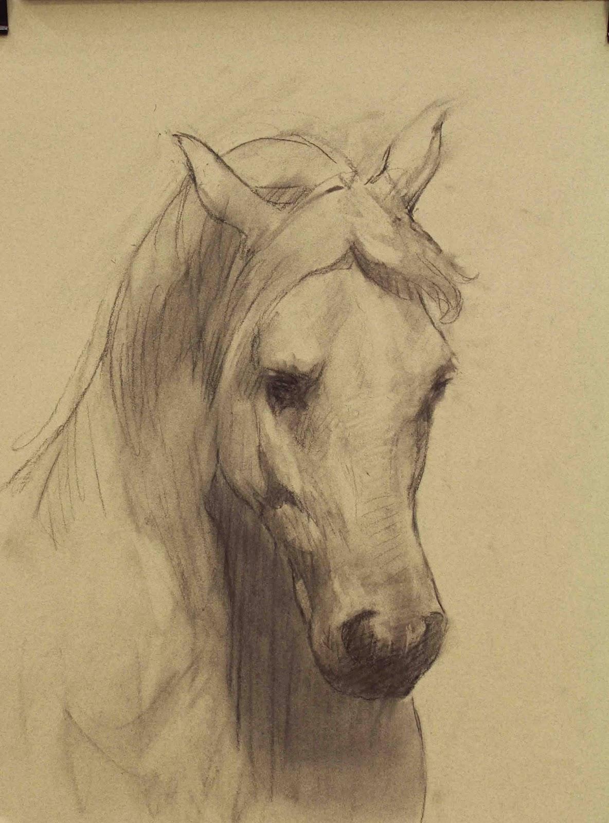 Arte Realista De Takiguthi Desenho De Cavalo Em Carvao Executado