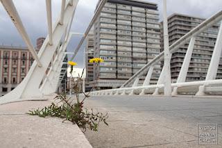 Fotografía de una planta creciendo en el puente de la peineta de Valencia