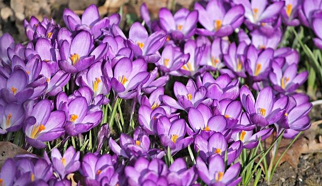 La primavera e la voglia di muoversi