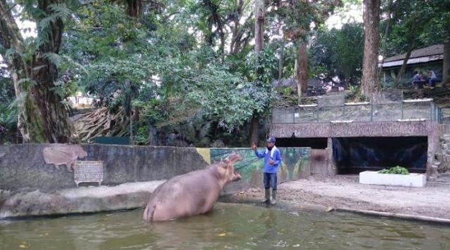Wisata Taman Hewan Pematangsiantar Sumatera Utara
